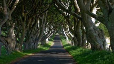 Dark Hedges Motorcycle Rental Ireland